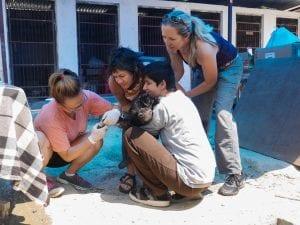 Animal Rehabilitation